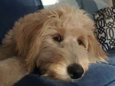 Meet Gracie Olson, Our June Pet of the Month