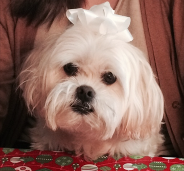 Meet Peanut, Our November Pet of the Month